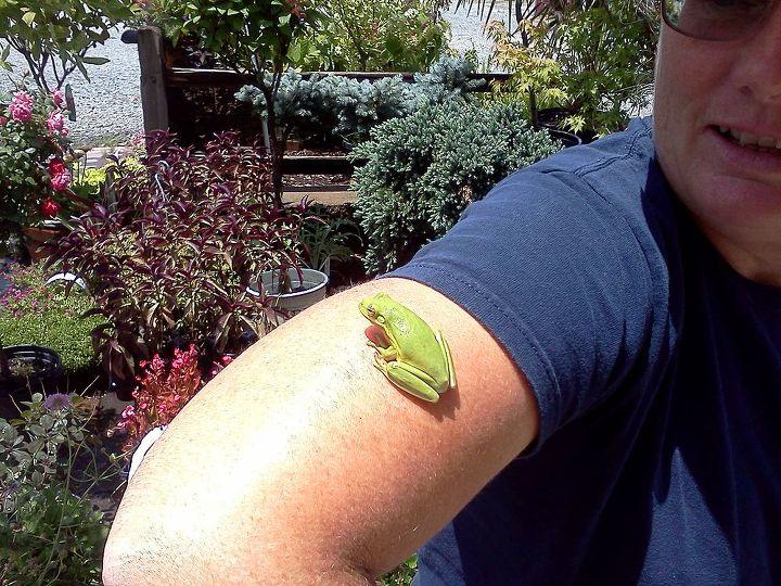 tree frog feels so funny with their sucker puckery feetsies