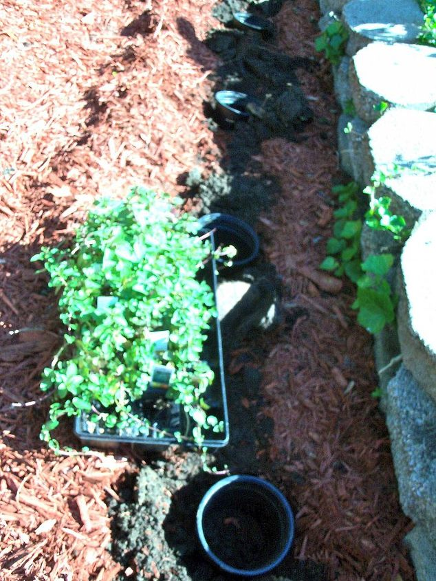"""Planted some """"chocolate mint"""" along the base of the raised garden. Plant smells delicious but supposed to be very invasive, so planted them inside of plastic planters that I buried in  the ground"""