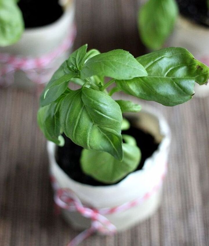 Paper Pots are a great way to share plants with other gardeners. You can make a cute label or write a message right on the pot.