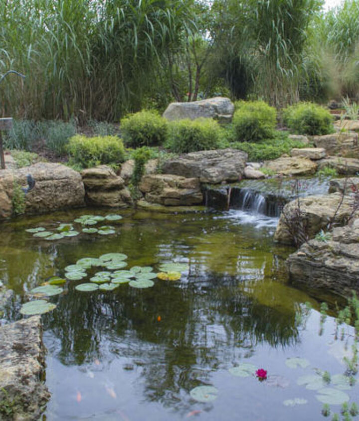 An ecosystem pond has koi and other critters.