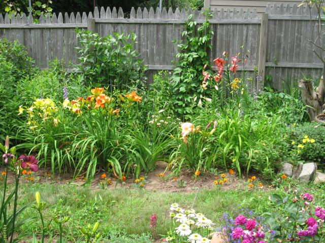 my secret love flowers, flowers, gardening