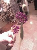 pretty shrub with violet berries, gardening