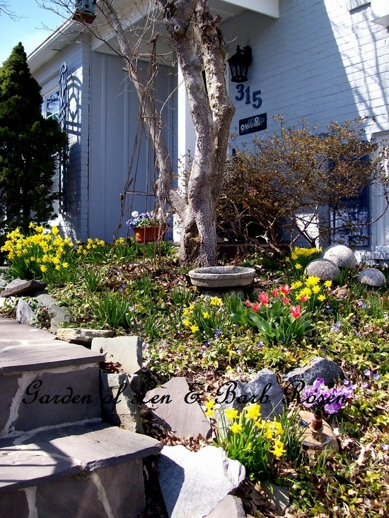 """My """"March Bank"""" of spring bulbs by the entrance."""