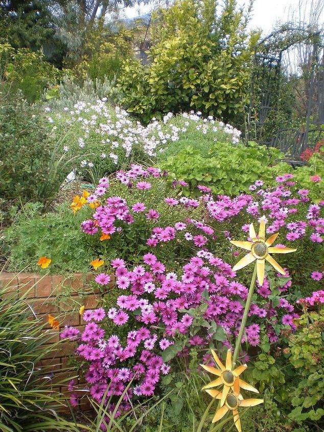 my garden, flowers, gardening