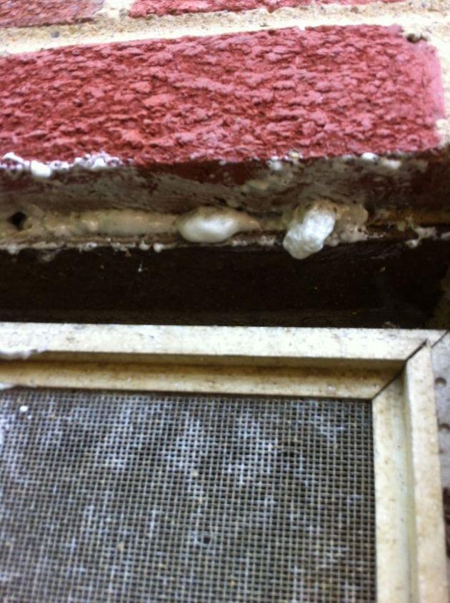 honey bee problems already, pest control, Brick hole filled with spray foam pest block
