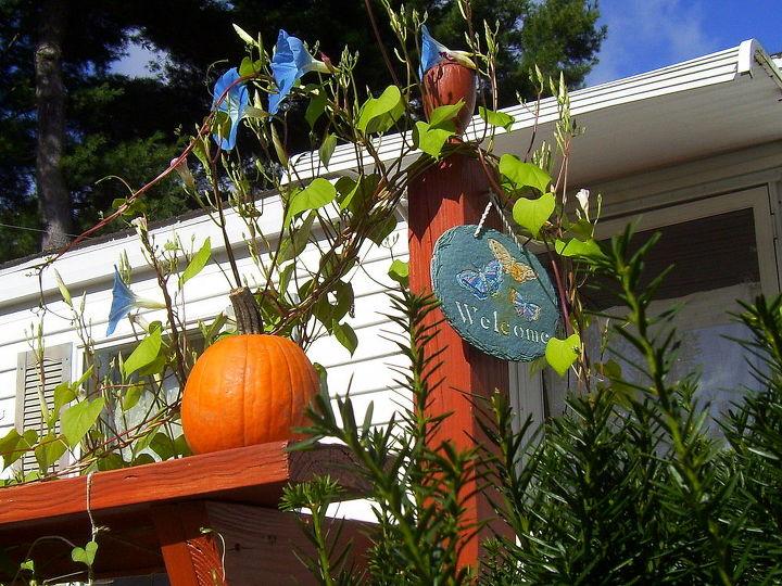 autumn flowers, flowers, gardening
