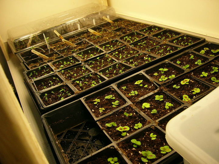 how to grow seeds indoors, gardening, A close look at the trays all you need is a little counter room to get started