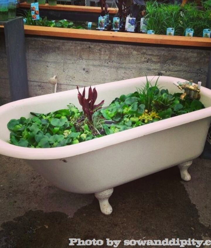Rub a Dub, pond in an antique tub. ( Milner Village Garden Center )