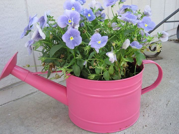 thriftytips for landscaping on a budget, flowers, gardening, perennials, Here is another example of how to get creative and and used what you already have for a pot I used an old waterig can as a pot for my pansies I just gave it a fresh coat of hot pink spray paint to freshen it up and voila