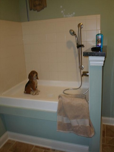 See More Pet Projects: http://bit.ly/ZzRQiT