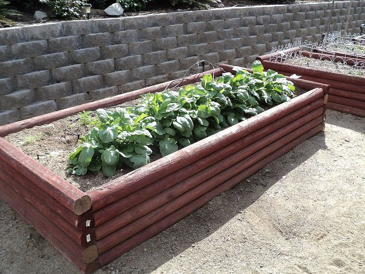 Here is one of the raised beds he constructed.