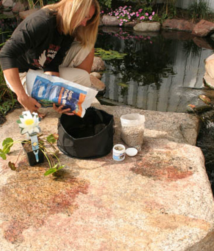Add a couple inches of Aquatic Planting Media to a fabric waterlily pot.
