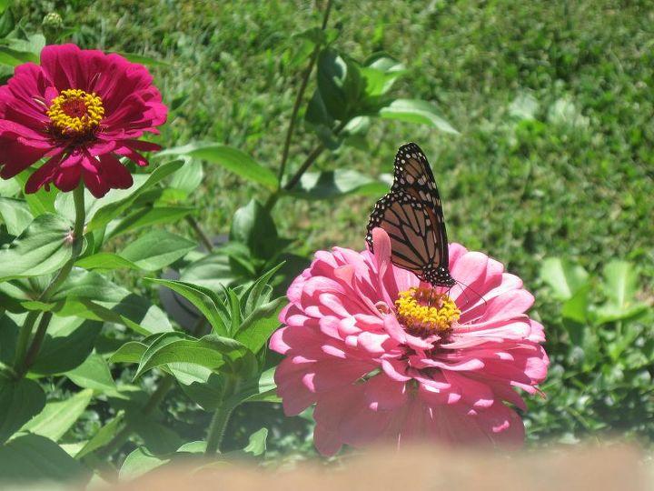 my flowers, flowers, gardening