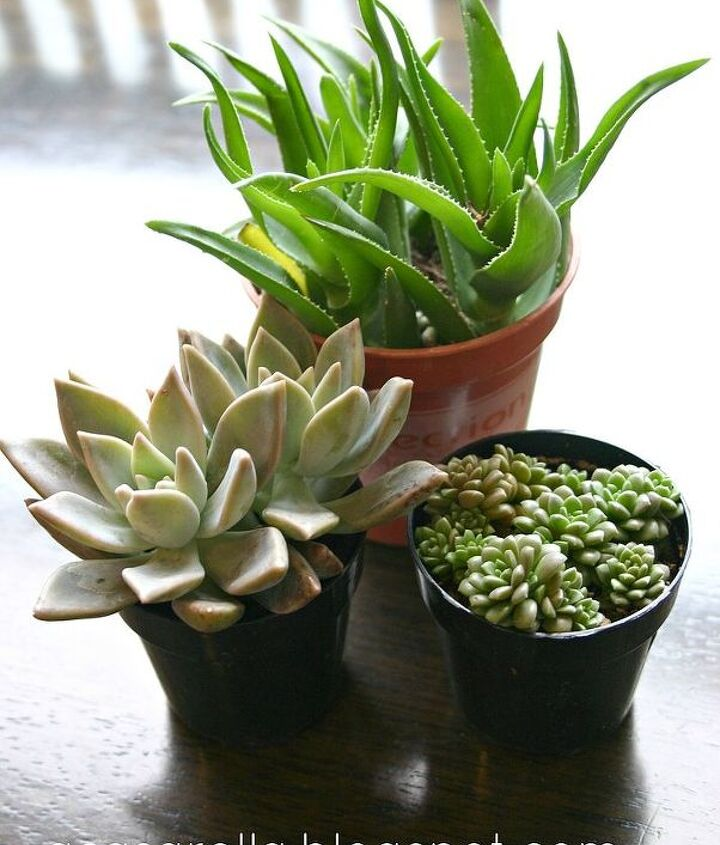 Add succulents...