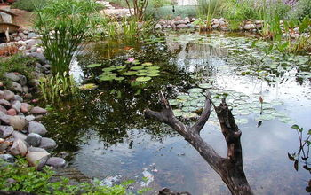 backyard pond ecosystem ponds ponds koi ponds waterfalls pondless waterfalls, outdoor living, ponds water features, Natural Looking Backyard Ecosystem Pond with waterfalls and streams near Austin TX
