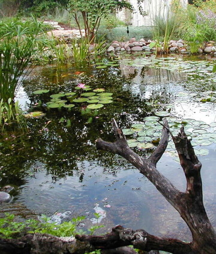 Natural Looking Backyard Ecosystem Pond with waterfalls and streams near Austin, TX