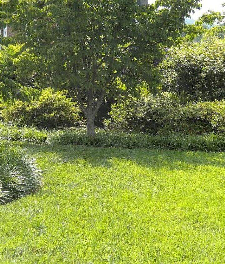 Rounding the corner, into the landscape (liriope edge, Kousa dogwood, azaleas viburnum & nandina in background)