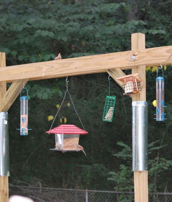 bird feeder made by son, gardening
