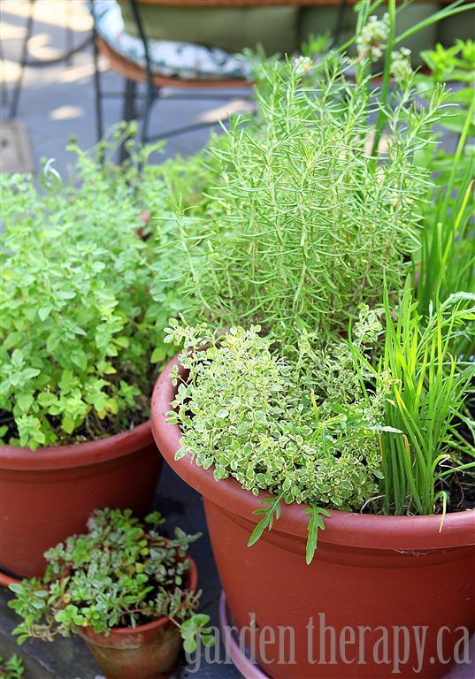 Plant An Herb Garden In Pots Grow your own perennial container herb garden hometalk grow your own perennial container herb garden container gardening flowers gardening perennials workwithnaturefo
