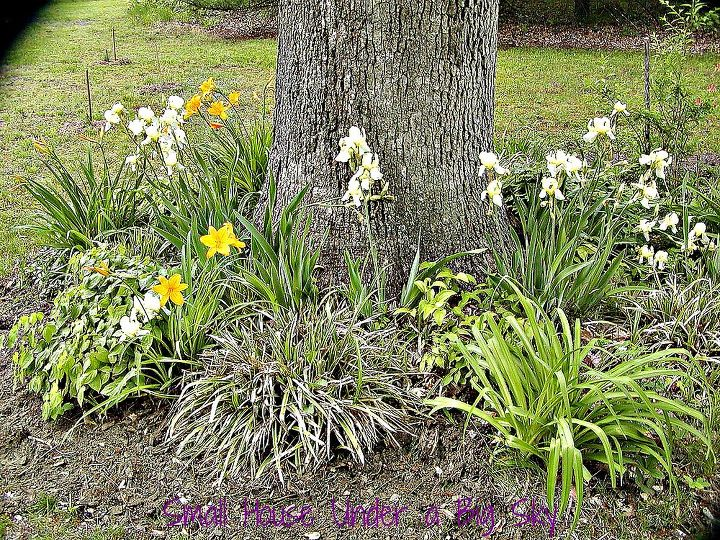 This is one of the mini gardens beds under our White Oak trees.