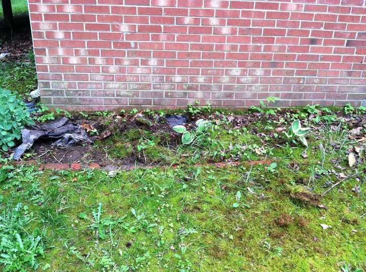 q reclaiming a flower bed, flowers, gardening