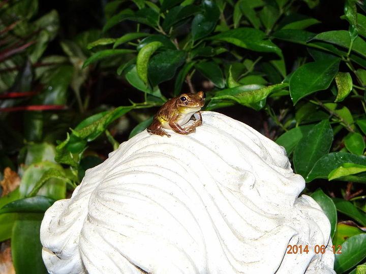 flowers frogs, flowers, gardening