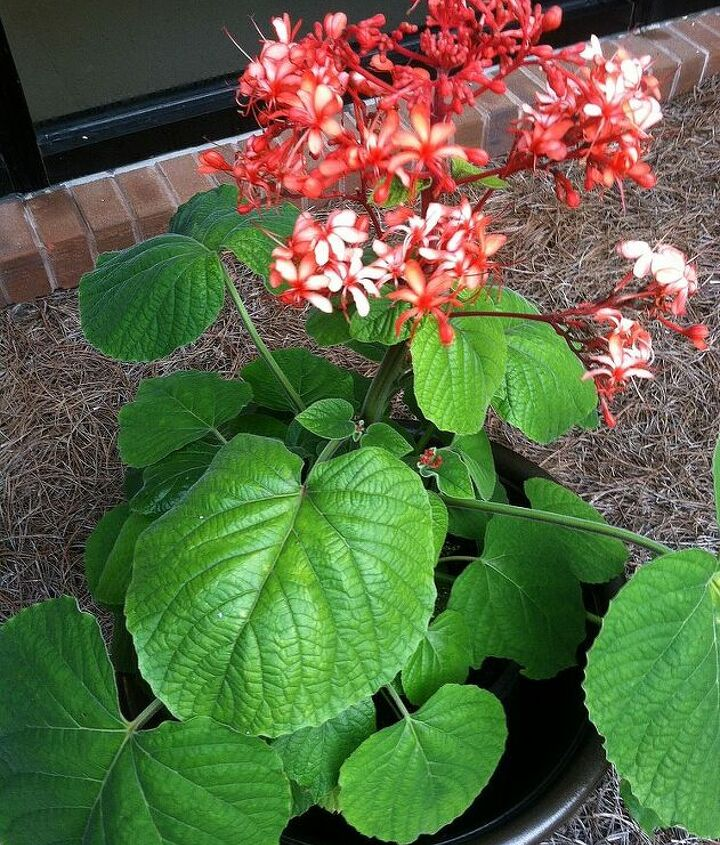 plant id does anyone know the name of this plant, gardening