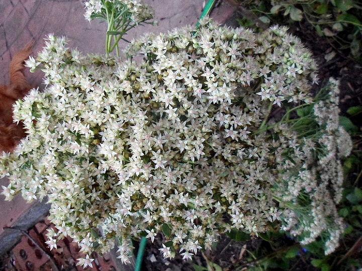 late blooming flowers, flowers, gardening