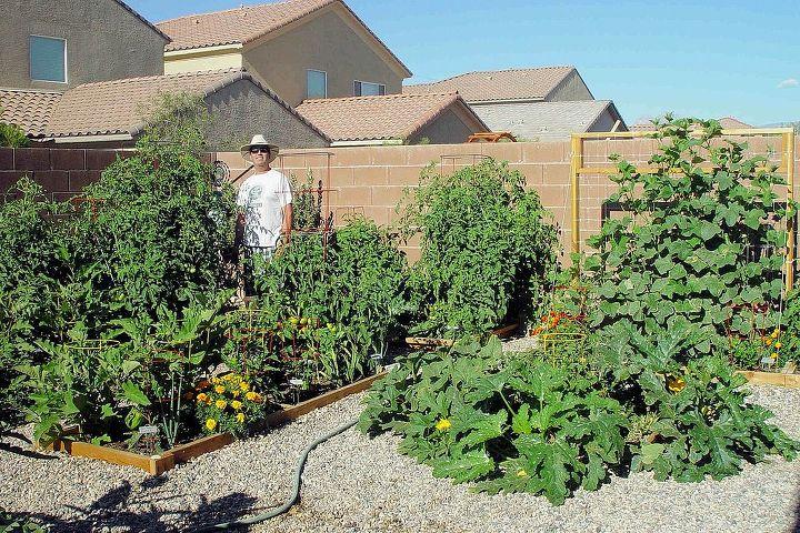 my veggie garden, gardening