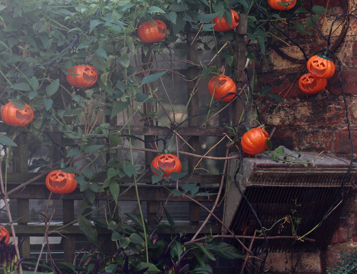 Pumpkin Lights Share Lattice With Autumn Clematis.  INFO on trailing habits of Autumn Clematis @ https://vimeo.com/37027072 AND @ http://bit.ly/19nccfc