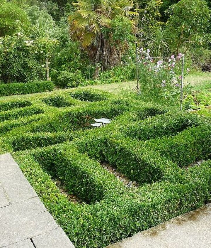 My knot garden, it goes down a slope.