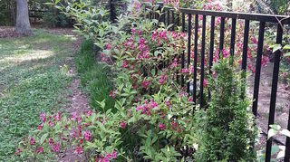 , the outside neighbor s weeds on left