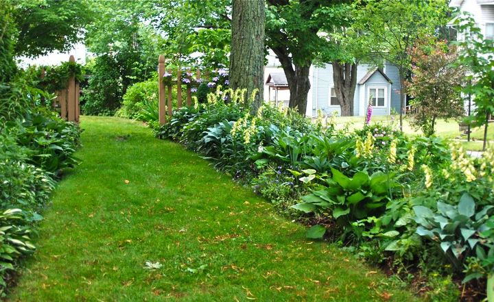 Yellow foxgloves (Digitalis grandiflora) with hosta, Brunnera, and many others along the Shade Path.