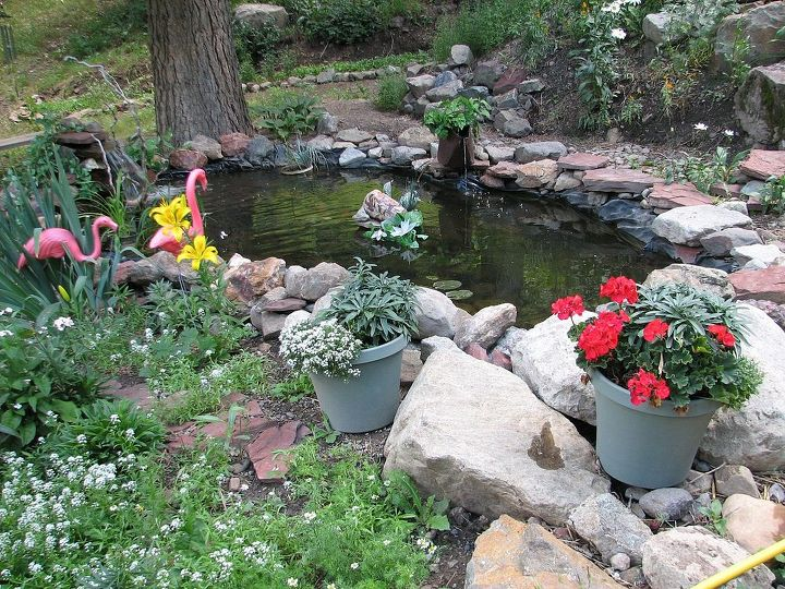 My first project was putting in a pond. I dug this with a shovel by hand and today it holds 1200 gallons of water and features a waterfall.