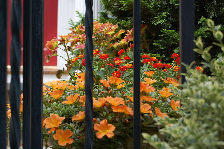 going orange this year, container gardening, flowers, gardening, Love this picture