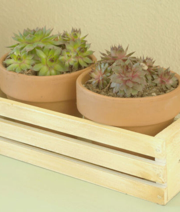 adding succulents to your home, flowers, gardening, succulents