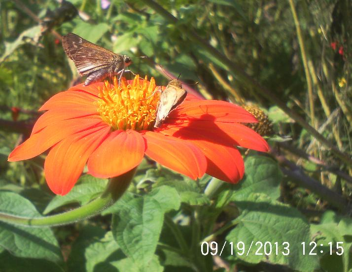 flowers and butterflies, flowers, gardening, pets animals