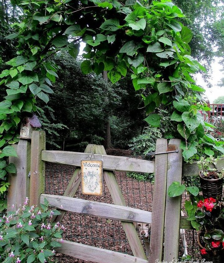 Branch Arbor this summer with moonflower & purple hyacinth vine covering it.