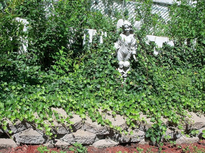 guardian angel statue overcome by ivy in back raised garden- have to work on this :)