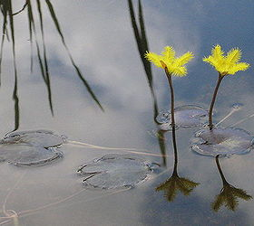 Water garden flowers for New England Ponds