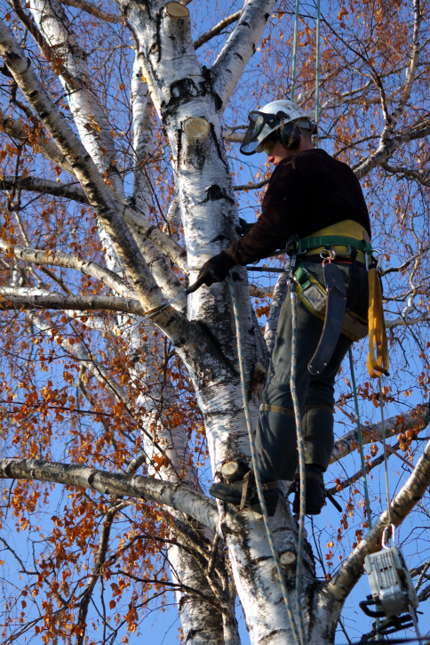 how to properly prune a young tree, gardening