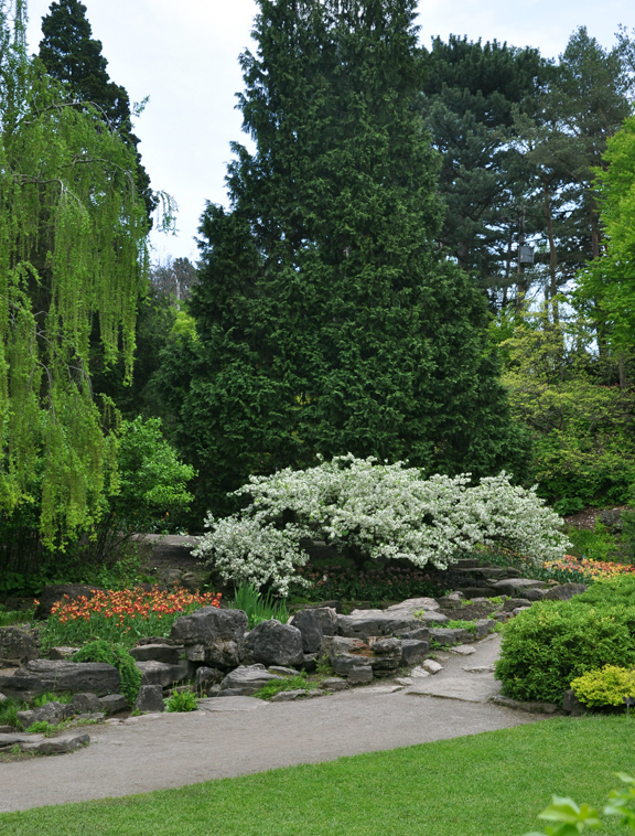 spring preview the rockery, gardening