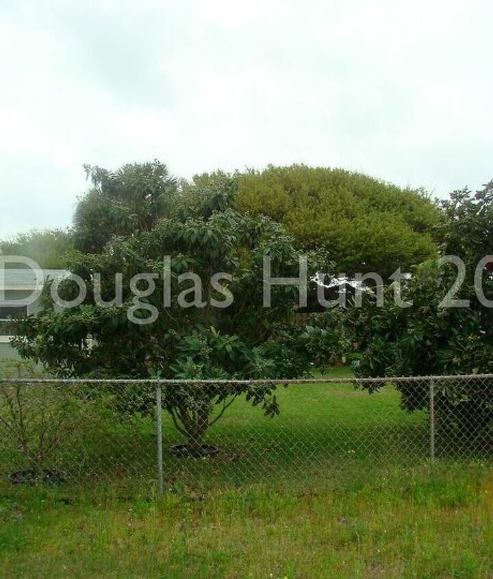 While a pair of loquat trees in my neighbor's yard provided some privacy, what stood out most was the chain-link fence.