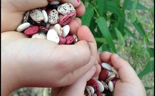 top 10 heirloom plants for children and new gardeners, gardening