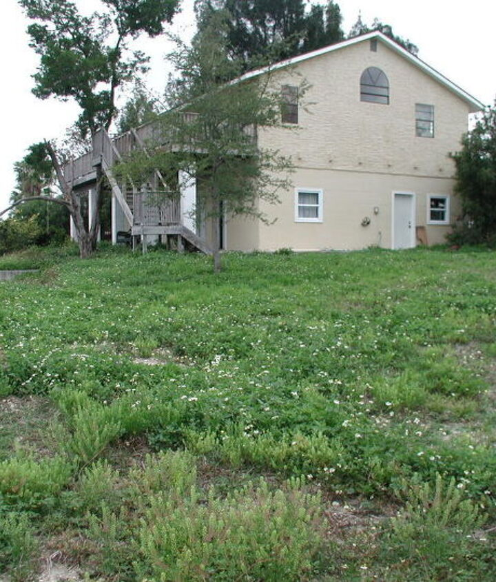 The yard was mostly full of  weeds and prickers. It's a pie-shaped lot; this photo was taken from the point.