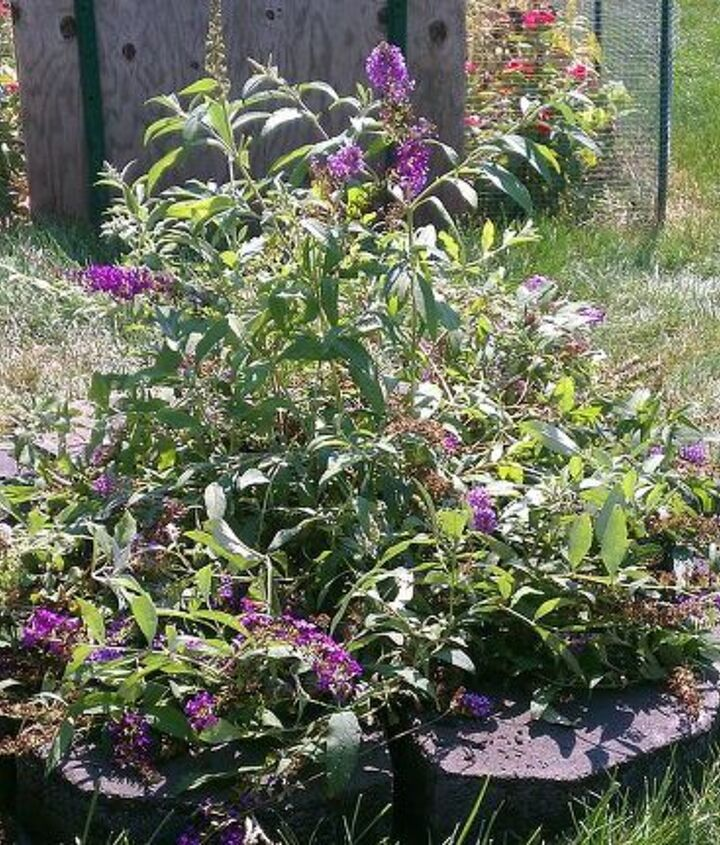 1st view: Finish last new flower bed with our new butterfly bush we got!