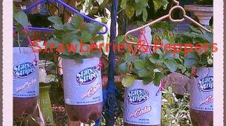 , These are strawberry and pepper plants that I made these hanging planters for I used 3 liter soda bottles and nylon braided rope and a pair of wire cutters to make the holes in the bottoms of the bottles