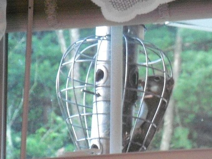 fun with our squirrel proof feeder, pets animals
