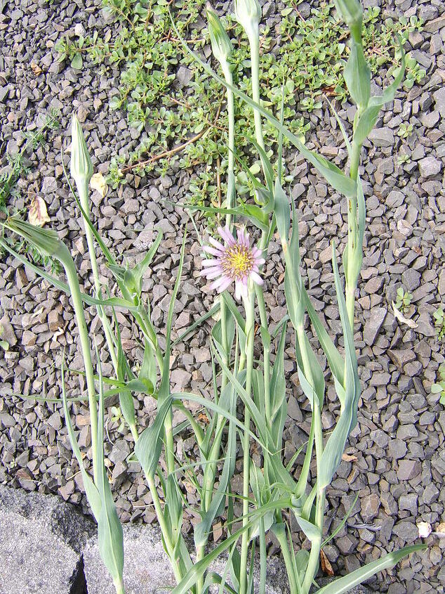 mystery flower, flowers, gardening