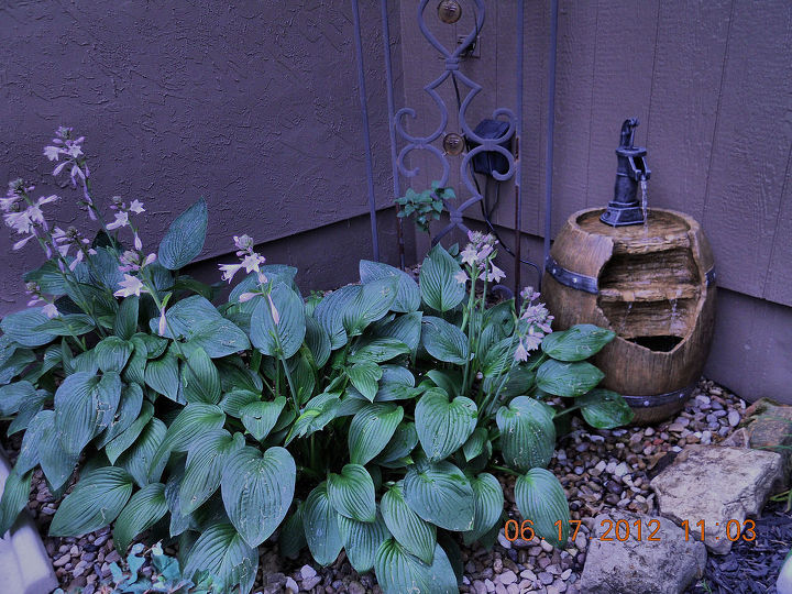 my garden smells of, gardening